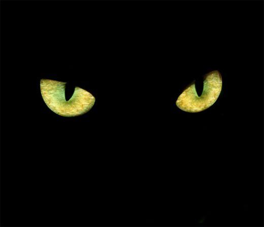 Binocular-Vision-In-Cats