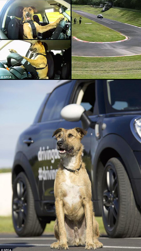 porter-driving-dog