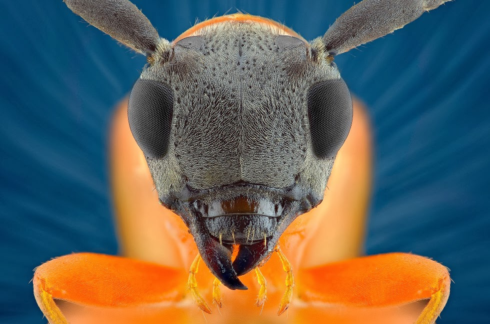 insectos-01
