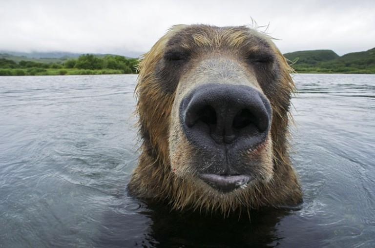 bear_010_2982884k