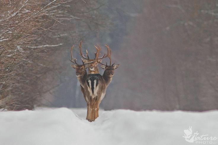 three-deer-perfect-timing